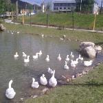 Xinzhou Fenyuan Pond