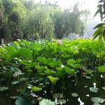 Foto de Yubei Bijin Park
