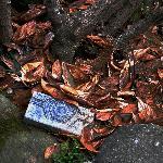 首善官邸——花园:记得秋风堆落叶,春来轻吹露百年。