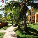 椰树和客房