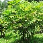 海南万绿园的植物郁郁葱葱