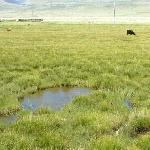 Chongqin Kaduo Grassland