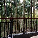 阳台外的槟榔树