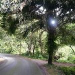 雨林,环境很舒服