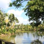 度假村池塘