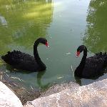 北京会议中心的黑天鹅,这是八月底开会拍的。