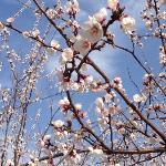 朝阳公园的春天来了。