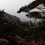博胜苑风景