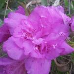 植物园里的鲜花