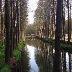 Water Forest Spot in Lizhong Town