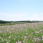北海道开拓村