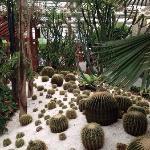 沙漠植物景区