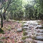 灵山的古径,走在铺满落叶的路上的那种放松感特别爽