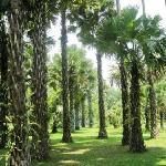 雨林谷里的参天大树