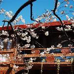 Lijiang hotel 丽江快乐驿站客栈