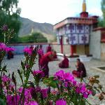 帕夏寺里面的花儿很漂亮