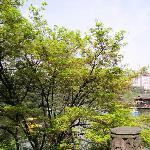 有树有水的昆明植物园