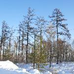 冬天的北极村森林公园