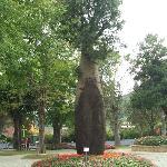 中台禅寺里的树