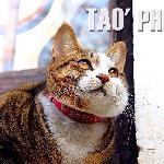 小雅里的猫