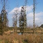冬天的花溪公园