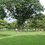 舒适的大草坪