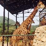 非洲动物区