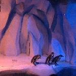 小企鹅要下水