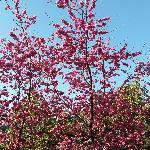 春日里的晋云山