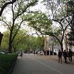 北大校园绿树成荫