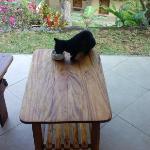 每天来光顾的小黑猫