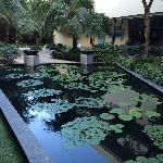 天井内池塘