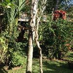 很简单的客栈,也有热带园林景观