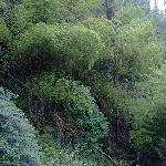 江南真是竹的故乡