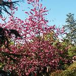 繁盛的桃花