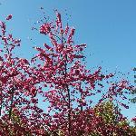 火红的桃花