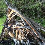 森林公园里的大树桩