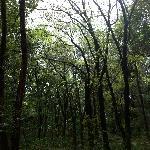 树木标本园