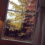 窗外的银杏和枫树