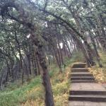 Mt. Qiqu Forest Park