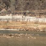 小溪中的鸭子