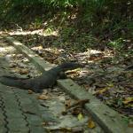 马奴干岛上能遇见打蜥蜴散步,多好的环境啊!