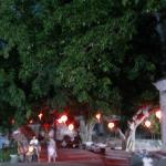 夜晚的榕树挂满灯笼十分有过节的气氛