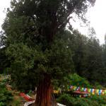 Foto de Giant Cypress Nature Reserve of Bajie, Nyingchi