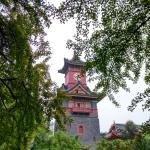 钟楼和树木