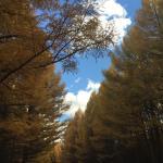 很漂亮的地方,秋天去的景色特别好