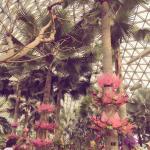 Photo de Shanghai Chenshan Botanical Gardens