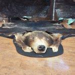 中心门口的一只棕熊标本
