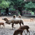 Photo de Chimelong Tourist Resort