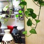 Foto de Shengmei Boutique Hotel